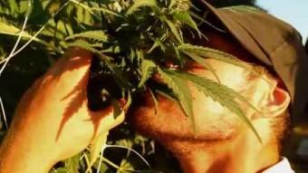 legalise cannabis drugs