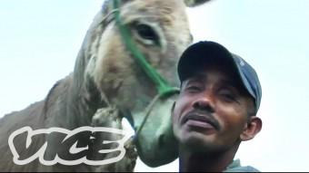 donkey-vice