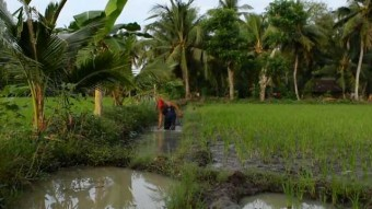 day in rice farming