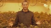 canada weed