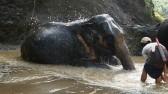 burma-elephants