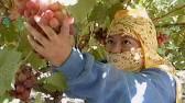 hiddden-harvest