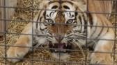 exotic-animal-trade