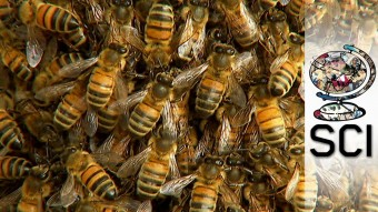 Tackling-The-Global-Honey-Bee-Crisis.jpg